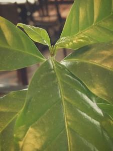 hagakayoko