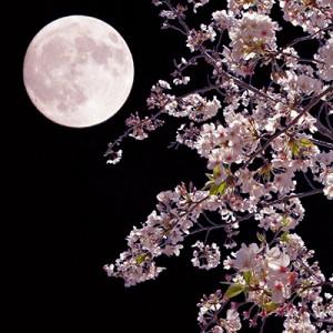 sakura_moon